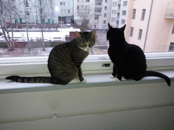 istuvat ikkunalla, paskapäät