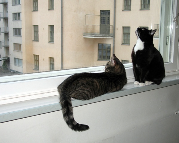 zetor makaa ikkunalaudalla ja katsoo ulos pihalle, ilona istuu ja kurkkii kohti taivasta