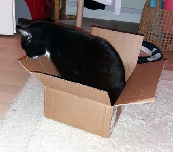 Ilona laatikossa