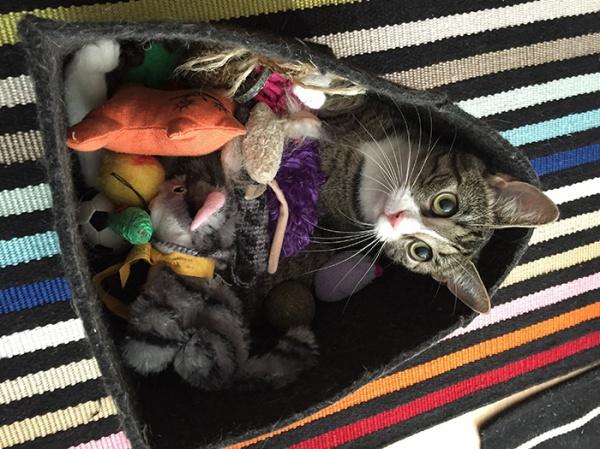 Zet huopakopassa kaikki lelut päällään