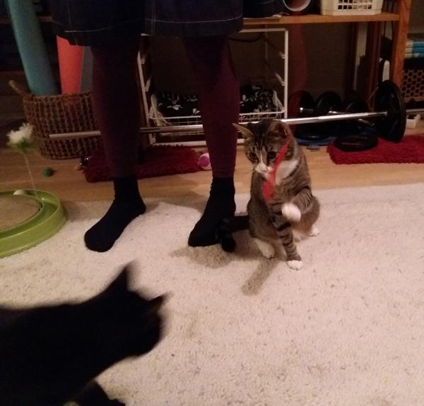 neljä kuvaa kun nää kaksi on lattialla vuoronperään punaisen langan perässä. Zetor suu auki kun Ilona leikkii