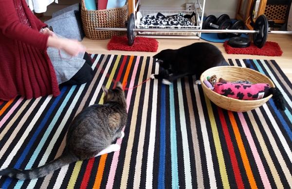 kolme kuvaa kun Satu leikittää nuita langalla, ihmisestä tosin näkyy vain polvet, kissat keskellä