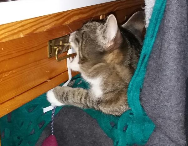 Zet yrittää raastaa hampailla pöytälaatikon lukkoa