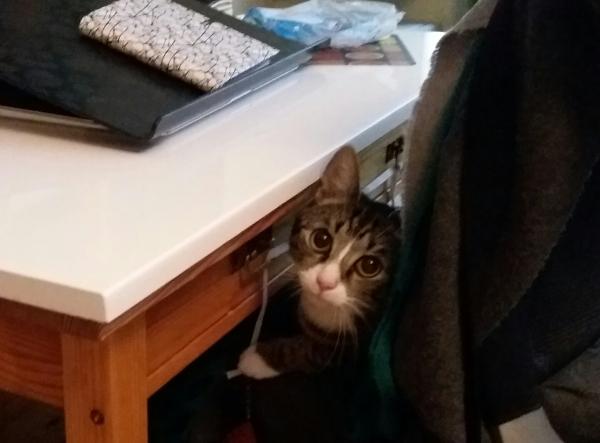 Zetor pöytälaatikon edessä tuolilla tuijottaa suurin silmin kameraan
