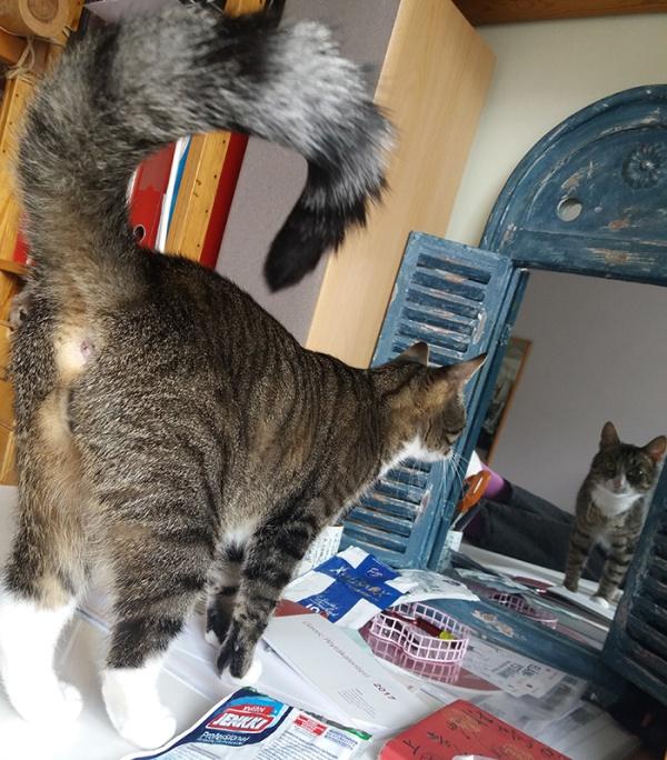 Zet katsoo itseään peilistä, eli me nähdään kissa edestä ja takaa