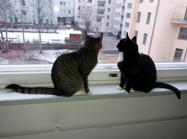 kissat istuu ikkunalla ja tuijottaa ulos. Luntahan siellä