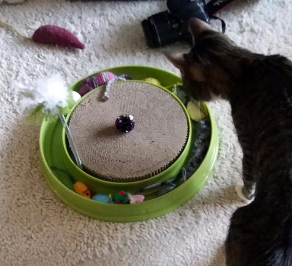 Zet tuijottaa rataa, joka on täynnä leluja