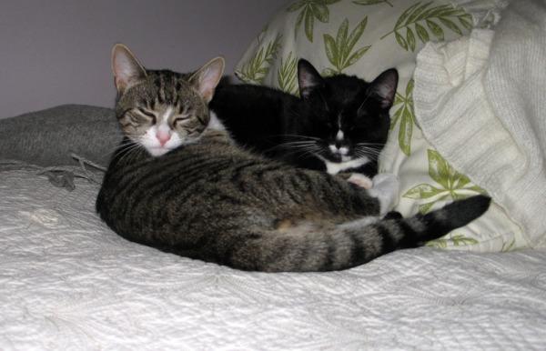 Ilona ja Zet lähekkäin nukkumassa