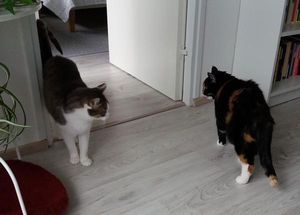 sofia ja olga sivuuttavat toisensa oviaukossa