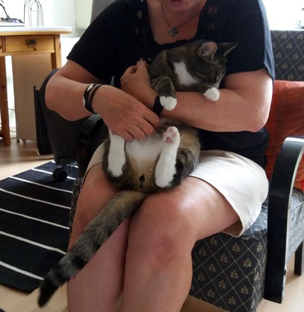 täs tulee yksitoista kuvaa siitä, kun toinen ja toinen kissa kiemurtelee mun ja7tai vieraan sylissä.