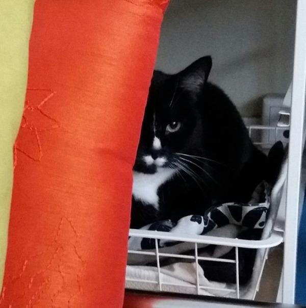 ilona nukkumassa korissa, naamasta näkyy puolet. Ihana nenu ja suu ja toinen silmä. Puolet kuva-alasta täyttää oranssin tyynyn reuna, joka vastaa tosi kauniisti mustaan kissaan.