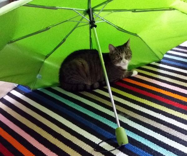 vihreä sateenvarjo on auki kuivumassa matolla, poika tottakai sen alle