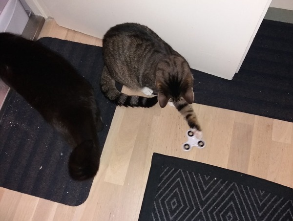 Zet koskettaa tassulla lattialla olevaa spinneriä, Ilonan pörheä häntä väistyy kuvasta