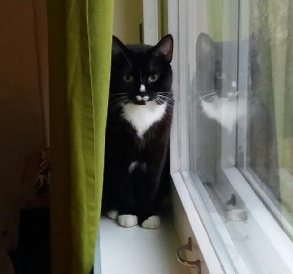 Ilona istuu ikkunalaudalla verhon ja lasin välissä