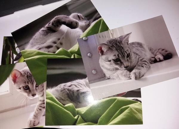 viisi postikorttia pöydällä, nuorehko egymau mauno