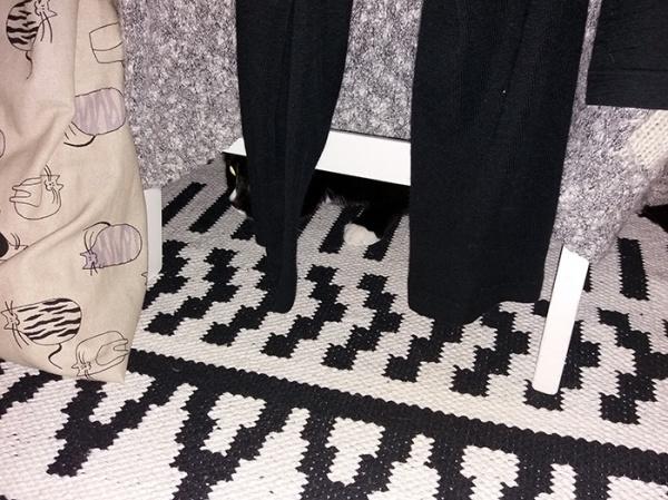 kummassakin kuvassa ilona pilkottaa mustavalkoisen maton päällä mustien housunlahkeiden takana, nenu ja tassu