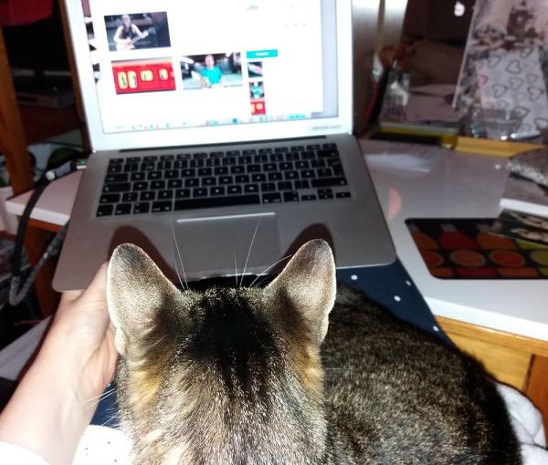 kuva on mun näkökulmasta päin tietsikan ruutuun, mutta siinä välissä on kissa Zet, mun sylissä. Jalat on pöydällä, siis mun jalat. Kuten aina.