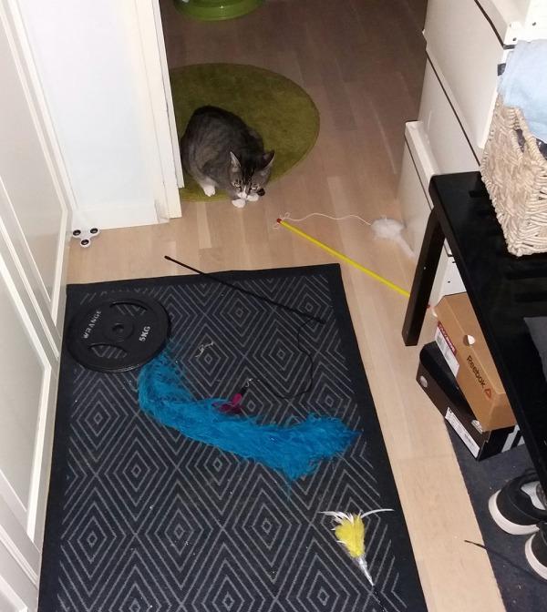 poitsu tuijottaa eteisen lattialla olevia ainakin viittä huiskaa.