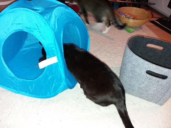 tässä taitaa nyt olla neljä kuvaa jossa Ilona tutustuu telttaan eestä ja takaa