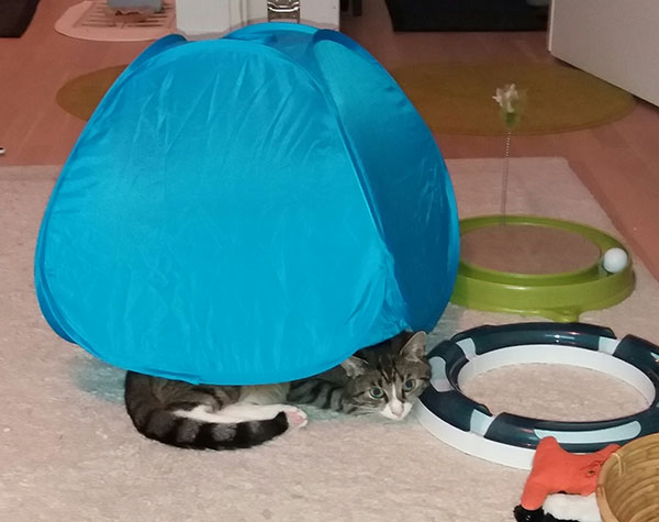Aivan, Zetor on siis ryöminyt teltan alle, koska voi.