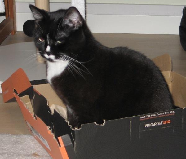 ilona istuu laatikossa jämäkästi