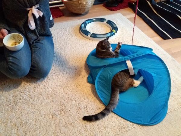 zetor on jo kumonnut teltan ja makaa itse siellä sisällä, satu leikittää villalangalla