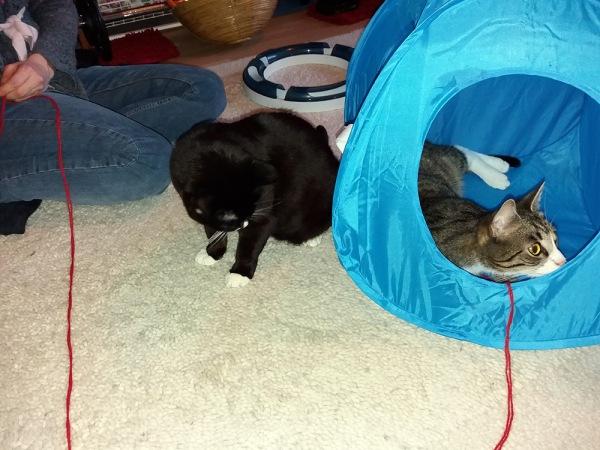 zetor teltassa langanpään kanssa, ilona tarkkailee teltan sivusta