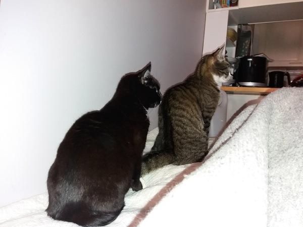 kissat istuu kuin kaksospatsaat sängyllä, ovelle tuijottaen