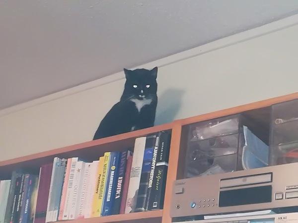 Ilona istuu kirjahyllyn päällä pirun ittensä näköisenä, vai mikä se saatana saapuu moskovaan kissa olikaan. jotenkin hämärä koko kuva myös. pelottava.