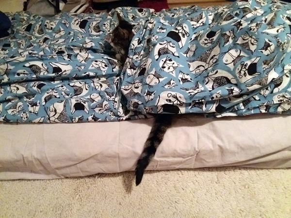 Zetor hupussa kissalakanan alla, pää ja häntä näkyy