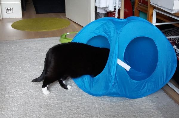 viisi kuvaa joss ilona hiipparoi telttaan sisään ja lopulta istuu siellä