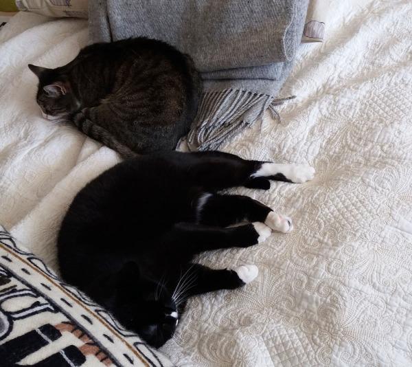 kumpikin petilläni unessa peput vastakkain