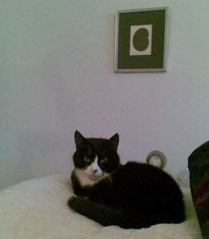 pikkumusta petillä, hänen yläpuolella mustaa kissaa esittävä taulu