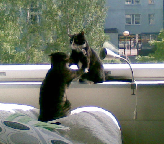 nahistelua ikkunan luona