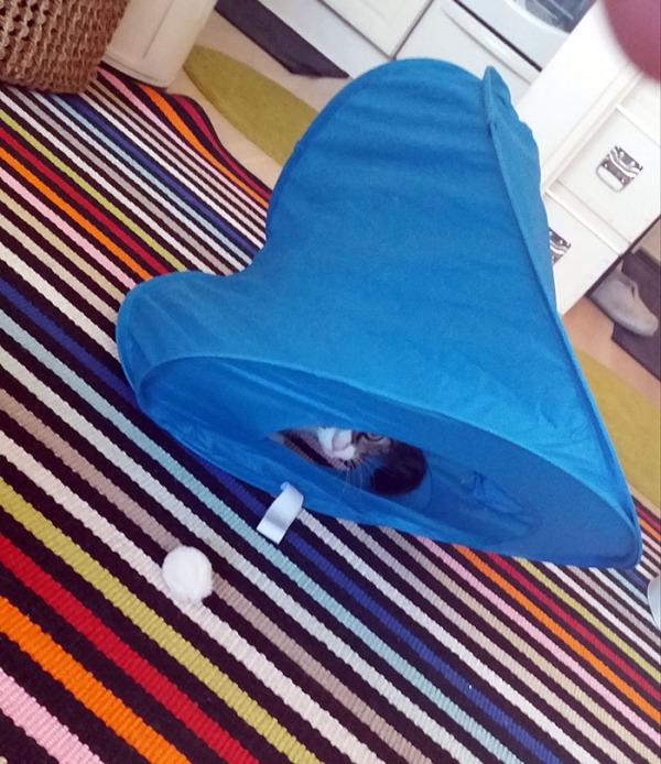 poika on ryssinyt teltan kasaan ja jäänyt itse sisäpuolelle, vähän naamaa näkyy