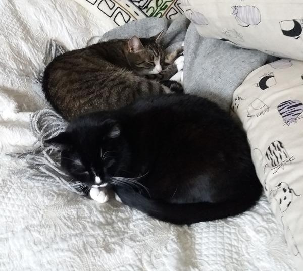 nukkuvat vierekkäin petillä