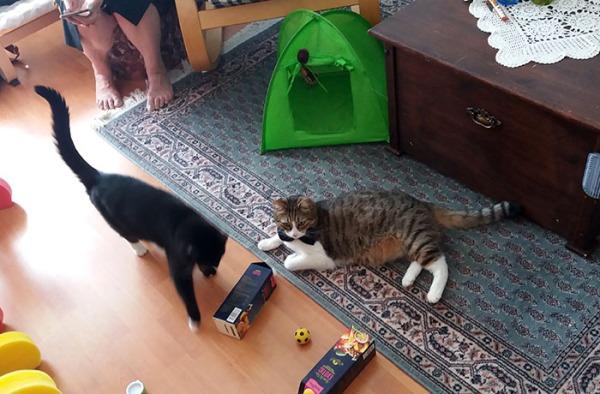 aika paljon kuvia parista kissasta jotka ulkonäöltä kuin Zet ja Ilo, ja vähän jotain kissatätetjä.