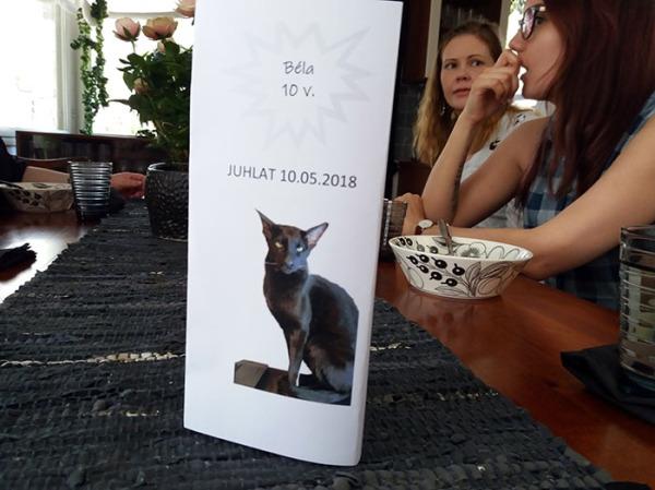 Taas kissatätejä eri asetelmissa, kun kissoja ei paljon näkynyt
