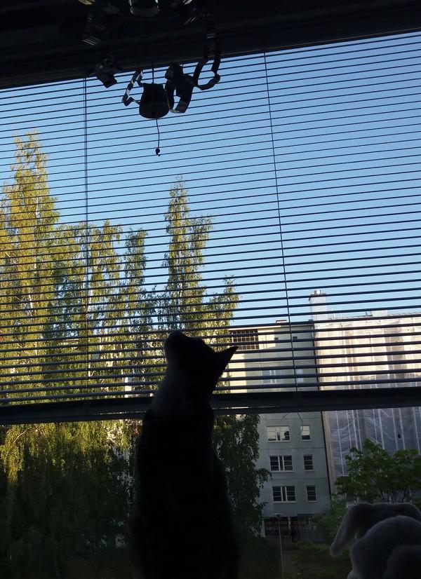 zetor tuijottaa ylös kelloa
