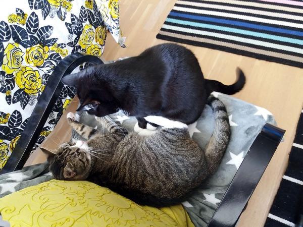 Nojatuolissa he 2 miettivät pitäisi alkaa painia vai ei.