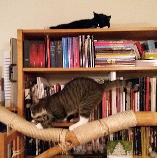 kirjahyllyssä he kaksi yhtäaikaa, Ilona lojuu hyllyn päällä ja Zet venyttelee oksan päällä Ilonan alapuolella