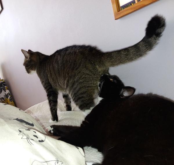 jotain 12 kuvaa kun kakarat nahistelee sängyllä. Ilona haisteli zetorin peppua, ja siitähän se sitten lähti.