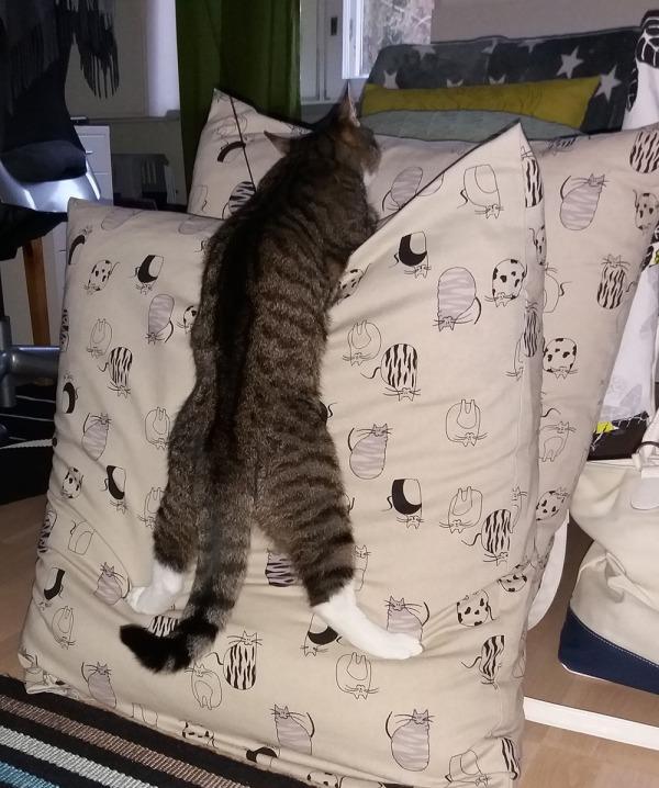 zet kiipeää pystysuoraan isoa tyynyä pitkin ylöspäin. Aika uskomaton asento
