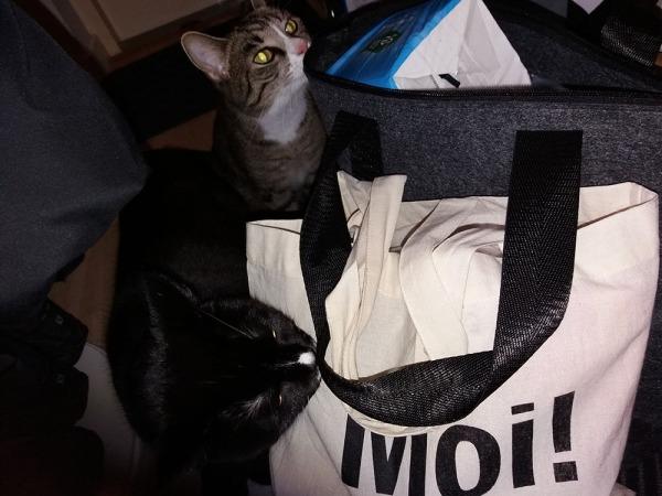 Ilona ja Zet tutkii eteisessä mun kasseja ja etualalla on kassi jossa lukee Moi! Ilona nuuhkii just sitä.