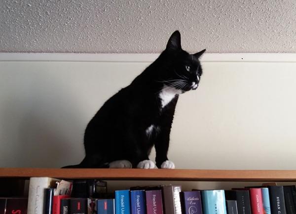 Ilona kattoo ikkunan suuntaan kirjahyllyn päältä. Kyllä sieltä jotain kiinnostavaa näkyy.