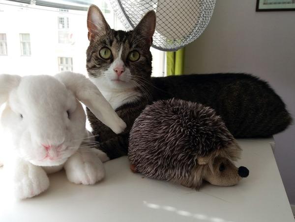 Zetor lipaston päällä siilin ja kanin kanssa. Jälkimmäiset leluja.