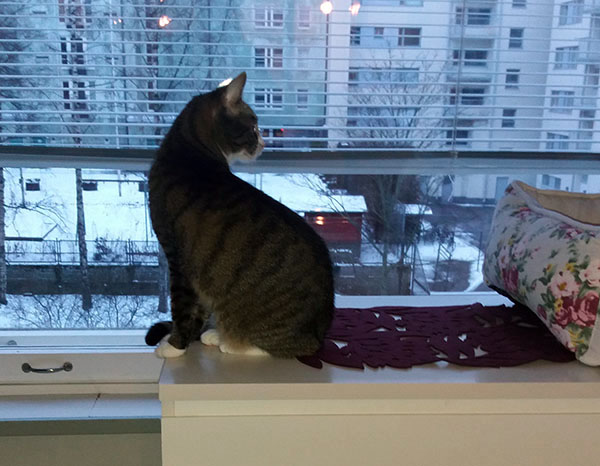 zetor kiertyy korkkiruuviksi ikkunan luona olevan lipaston päällä