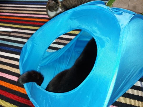 Teltasta näkyy Ilonan selkää ja häntää, Zetor pällistelee taaempana, mitä Ilona tekee