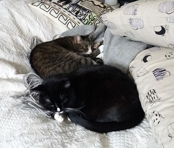 lapset petillä nukkumassa vierekkäin