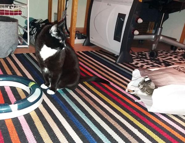 Ilona ja Zet lattialla, Zet kurkistaa pussista ja katsovat toisiaan Ilona istuu lattialla.